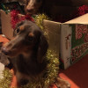 Christmas in Japan (Bakappuru Stories)